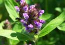 SERIÁL S KNIHOU EKOZAHRADY (díl II.) : Jedlý trávník aneb Vitaminový salát k sešlapu