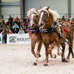 Výstava Kůň v Lysé nad Labem se odehraje ve znamení 100 let československé státnosti