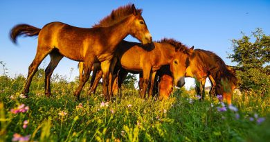 Rezervace divokých koní se stala součástí nově vyhlášené národní přírodní památky