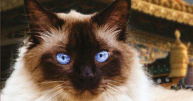 SRPNOVÁ SOUTĚŽ S KŘÍŽOVKOU o knihu Dalajlamova kočka a čtyři tlapky duchovního úspěchu