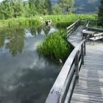 SERIÁL S KNIHOU EKOZAHRADY (díl IV.) : Přírodní bazén aneb Čistá a zdravá voda na koupání v zahradě