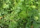 SERIÁL S KNIHOU EKOZAHRADY (díl I.) : Zeleninová polykultura aneb Pěstování zeleniny založené na jejím sklízení