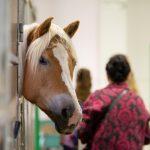 24. ročník největší výstavy koní v České republice klepe na dveře