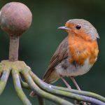 Ornitologickou poradnu otevřeli nově v KIS Lomnice nad Popelkou